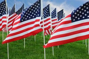 amerikanska flaggor i fält foto