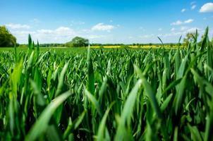 vete fält
