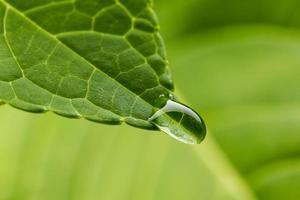 grön bly med droppe på nära håll