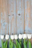 vita tulpaner i rad med tomt utrymme på gammalt trä foto
