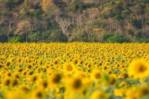 solblomma gård