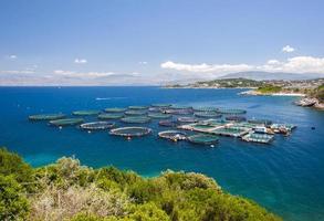 grekisk fiskodling foto
