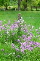 appalachian lantgård foto