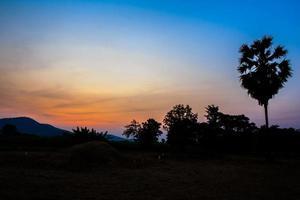 träd vid solnedgången på landsbygden.