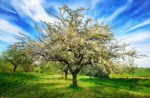 idylliskt lantligt landskap på våren foto