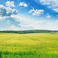 fält och himmel