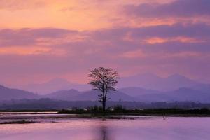 landskap med ett ensamt träd på sjön