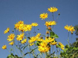blommor och himmel foto