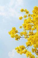 gul blomma med blå himmel