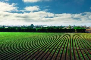 jordbruksfält under blå himmel foto
