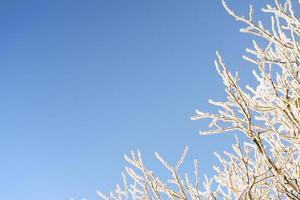 frysta grenar mot blå himmel foto