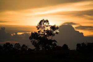 siluetträd, solnedgångens färg