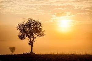 savannafält