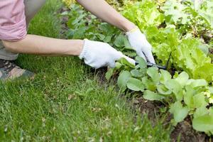 ung kvinna med sko som arbetar i trädgårdsbädden foto