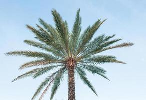 palmträd med blå himmel
