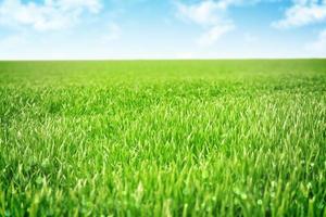 himmel och gräs bakgrund
