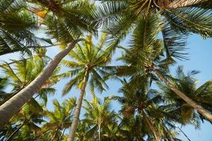 palmer mot en blå himmel foto