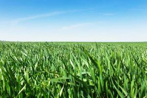 fält av grönt gräs och himmel