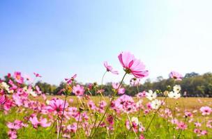 vacker blomning vår med blå himmel