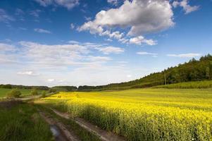 blå himmel och gult fält