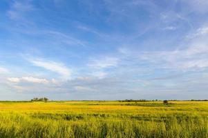 soligt grönt fält och blå himmel. kväll.