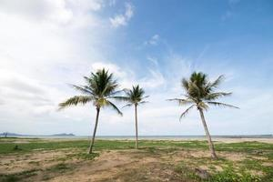 fina palmer på den blå himlen foto