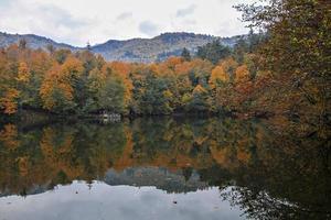 träd reflekterade i sjö och himmel