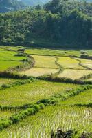 ris arkiverad blå himmel woodle koja