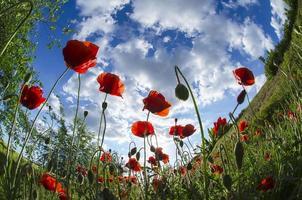 bland blommor
