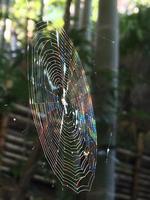 spindelnät som lyser som regnbåge