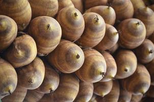 kokosnöt av brasiliansk palm foto