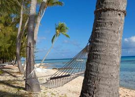 hängmatta mellan palmer foto
