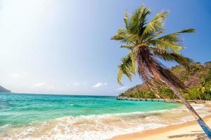 strand och palmträd foto