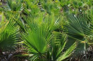 palmanbätter - spanien foto