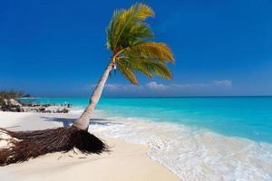 perfekt tropisk strand foto