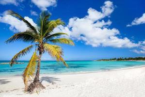 vacker karibisk strand foto