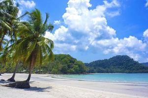 tropisk semesterort med en grön lagun och palmträd foto
