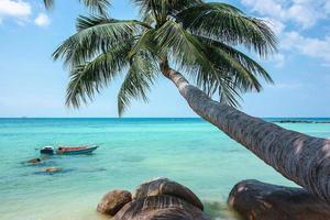 kokosnöt träd hängande över stranden och turkos havet foto