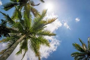 palmträd, risterrasser i Bali foto