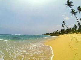 strand med vackert vatten och palmer