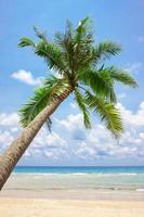 tropisk vit sandstrand med palmträd foto