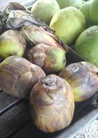 sockerpalme eller toddy palm