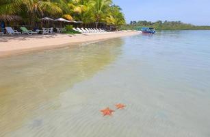 sjöstjärna strand, bocas del toro, panama