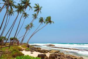 palmer vid den tropiska kusten i Sri Lanka