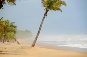 jungfru strand med palmträd foto