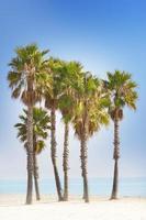 palmer och blå strand