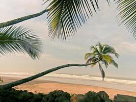 kokospalm på stranden foto