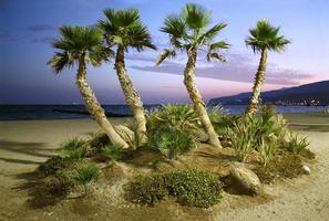 palmer och stranden vid solnedgången