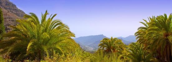 gran canaria kanariefågel palmträd berg