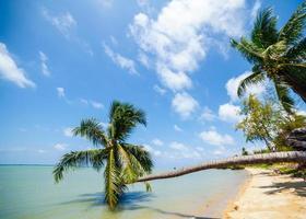 palmer på en tropisk strand